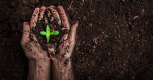 An Image of soil where industrial hemp plants are grown on American farms