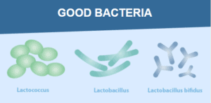 An image of good bacteria