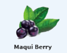 An image of maqui berry