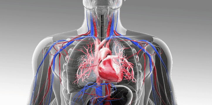 The cardiovascular health system of human body