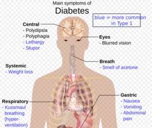 cbd oil and diabetes - an illustrations of anatomy of the human body big picture