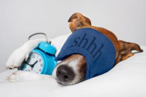 An image of a sleeping dog